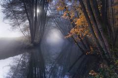 Lost in Reverie (@hipydeus) Tags: autumn mist misty fog bayern bavaria stream nebel herbst bach