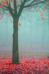 (Mah Nava) Tags: november autumn mist tree colors fog colours nebel herbst foggy baum    neblig   novembermist