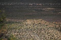 Goat Hill Archaeological Site (em_burk) Tags: arizona archaeology canon ruins village desert nativeamerican pottery kayenta goathill