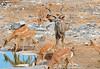 DSC_9495 (stephanelhote) Tags: animaux parc etosha afrique namibie éléphants zambie himbas guépards