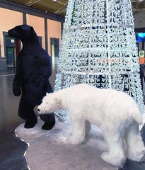 Somebody is waiting for you (Velolo_83) Tags: bear navidad alicante estacin renfe costablanca osos rboldenavidad