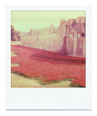 Sea of Poppies (Cris Ward) Tags: uk sculpture color colour london art film monument analog polaroid sx70 lomography memorial landmark retro poppies instant tribute analogue remembrance toweroflondon attraction impossible landcamera impossibleproject