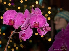 Photobombing the Bokeh Shot (Jerry_a) Tags: christmas flowers orchid longwoodgardens photobomb canon7d