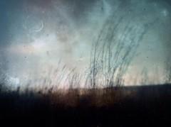 Zephyr (BLACK EYED SUZY) Tags: moon wind explore zephyr grasses breeze tadaa iphone lenslight mextures