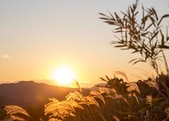20141206-_G7A9262 (Fomal Haut) Tags: sunset sun japan   su