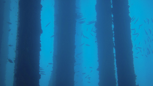 Forests under the sea