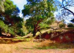 Mystical forest (Harold Litwiler, Poppy) Tags: california trees fall digital december painted valley santaynez westcoast santabarbaracounty 2014 santaynezvalley d7100 mightyoaktree