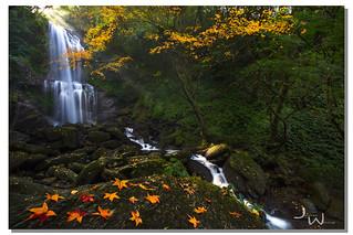 雲森瀑布 - Golden Maple Dream,  三峽, Taiwan