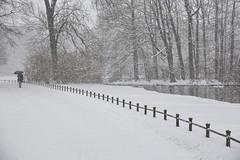 Snow in the English Garden (suzanne~) Tags: park trees winter snow umbrella fence germany munich path walk englischergarten wah englishgarden