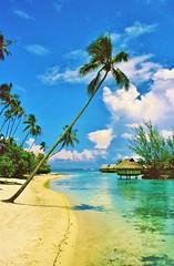 Moorea...paradise (stevelamb007) Tags: beach clouds paradise pacificocean palmtree southpacific oldphoto moorea frenchpolynesia stevelamb