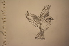 flying bird (Barfuss Photographie) Tags: pencil sketch drawing vogel