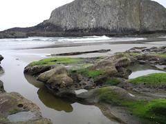 2016-04-27_DSCN5301 (becklectic) Tags: beach oregon pacificocean oregoncoast tidepools sealrock 2016