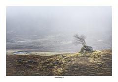The leaning tree (chewyco69) Tags: tree fog moor arbre brouillard ecosse lande