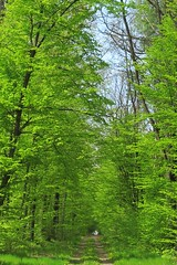 green forest :) (green_lover) Tags: trees green nature forest spring woods path poland