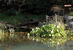 Morning light (Ingrid Friis Photo) Tags: morninglight pond sweden stones damm stenar alnarp morgonljus