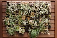 Duke Gardens (Dan | Hacker | Photography) Tags: outdoors durham northcarolina dukegardens airplants vscofilm