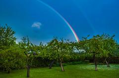 Rainbow (TOMS) Tags: blue sky color tree green nature colors rain wow garden rainbow nikon outdoor 1855mm nikkor liepaja d3200 vrii