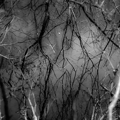 Pond Reflection 003 (noahbw) Tags: shadow blackandwhite bw abstract blur reflection water monochrome forest square landscape blackwhite pond woods nikon dof natural branches depthoffield d5000 noahbw oriolegrove