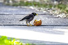 having his lunch. (Myphotorose-on and off.. :)) Tags: o2 best natures breathing cleanair naturelover natureart naturelove naturesbeauty naturephoto naturebeauty natureisbeautiful naturepics naturepic naturecollection natureseekers natureinside naturediversity natureskingdom naturerv naturejosefharald natureseeker naturespecialist natureobsessionflowers natureobsessionlandscapes lifeinism tagsforhearts natureobsessionmacro naturephotonatureloverforlife