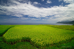 () Tags: landscape rice farm taiwan  hualien