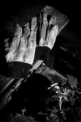 (176/366) Gardening at Night (CarusoPhoto) Tags: gloves bw john caruso carusophoto photo day project 365 366 plant planting pot potted sunflower garden work gardening