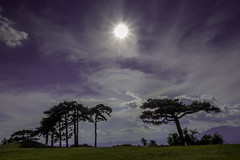 Sun (hilmi_cskn) Tags: travel trees light sunset sky cloud sun color tree tourism nature colors backlight clouds turkey ray natural outdoor trkiye olympus landspace turizm