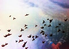 (mikehip) Tags: summer portrait sky usa man film birds 35mm person photography photo nikon exposure kodak double filmswap
