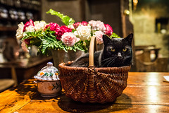 Chillin (Tiomax80) Tags: wood flowers france art cat 35mm blackcat french table wooden eyes nikon kitten chat basket f14 14 negro kitty sigma chilling gato bunch rest bouquet tradition bb chill guesthouse oldfashioned chatnoir gatonegro panier cantal aurillac d610 woodentable osier tiomax sigmaart barathe tiomax80 sigmaart35 gioudemamou