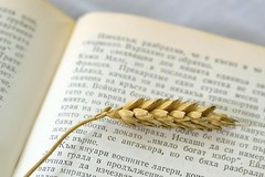 food for Body ang Soul (adelina_tr) Tags: opposites nikond5300 book grain wheat macromondays