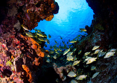 Cozumel (jcl8888) Tags: cozumel underwater scuba mexico diving nikond7200 tokina1017mm wide angle