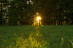 Sunstar (Matt Champlin) Tags: existence light love summer fall autumn nature landscape green sunstar sunset random canon 2016 home