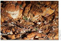 Wanderung zum Beichelstein (Mr.Vamp) Tags: beichelstein alpe alpebeichelstein mrvamp aussicht natur landschaft berge allgäu view nature landscape mountains