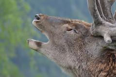 DSC_3926 (d90-fan) Tags: rauris raurisertal natur alpen salzburgerland sterreich nationalpark npht hohe tauern wandern krumltal seidlwinkeltal