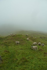 (London Permaculture) Tags: mist sheep derbyshire permaculture castleton 2014 cavedale nationaldiplomagathering