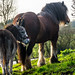 DONKEY AND HORSE IN A FIELD ON A COLD DAY REF-100757