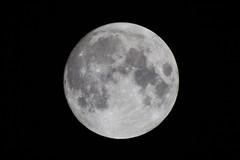 1000 mm full moon (satoshikom) Tags: fullmoon mirrorlens 2xmultiplier canoneos60d rokinon500mmf63