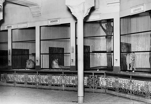 Blackpool Tower Zoo No Date A Photo On Flickriver