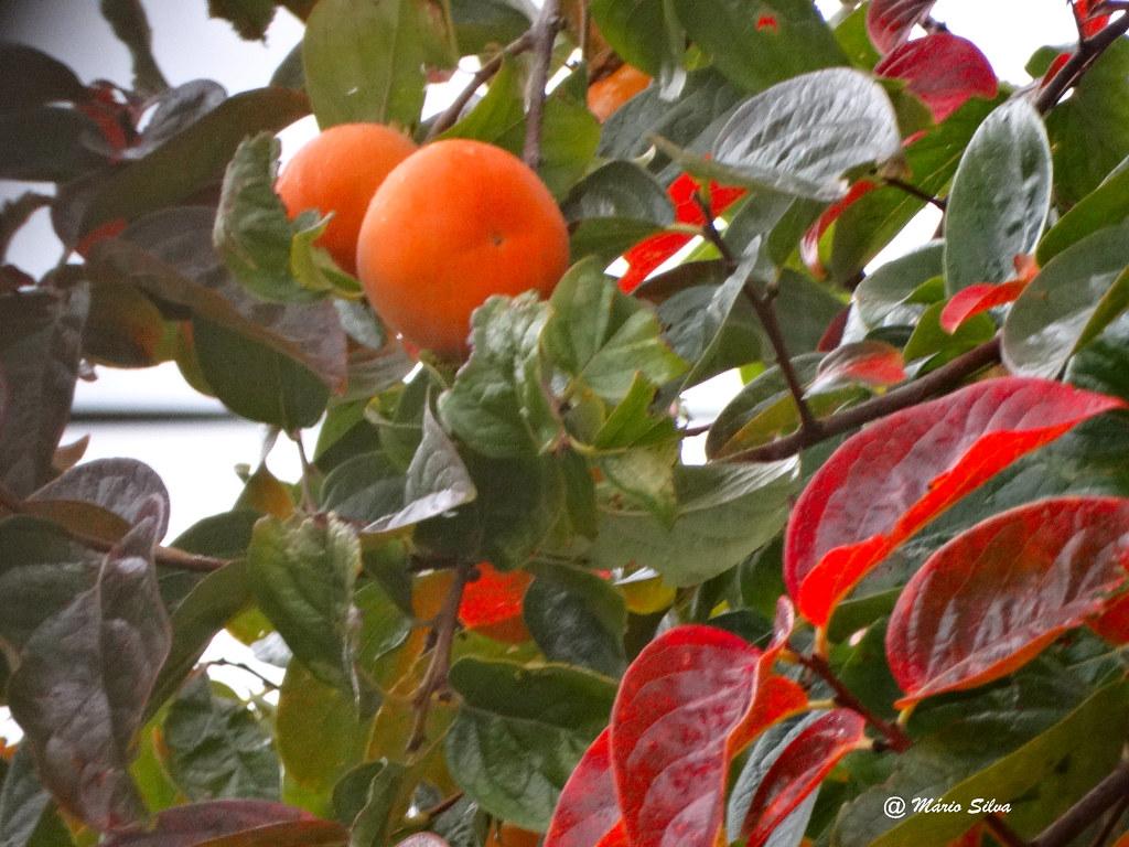 Águas Frias (Chaves) - ... frutos de outono ...