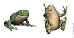 Grenouille 3D (annegrandin) Tags: france art face modern digital french anne 3d maya moderne frog numrique profil grenouille artiste grandin contemporain modlisation