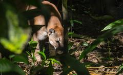 (picsmarc) Tags: nature animals fuji xe2 fujifilmx