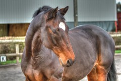 Rolly (russzr7) Tags: horse hdr equine