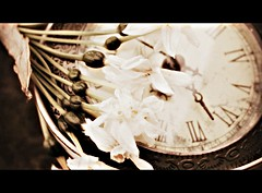 MEMORIES 087 (EllasEdge) Tags: cinema garden tea gray muse portal timeout whispers earlgrey bestillheart