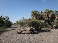 Kenia. Loyangalani. A la entrada del pueblo (escandio) Tags: kenia 2014 loyangalani viajealturkana