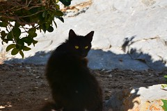 Just eyes from the shadow (B. Dur-C.) Tags: eye cat ojo chat oeil gato gatto occhio