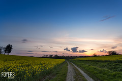Evening walk around Sweffling (Bob Foyers) Tags: sunset sky suffolk track wordpress canon5d rapeseed 1740mml sweffling foyersphotography