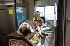 (toshihide.sato) Tags: animal cat enoshima