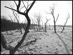 eba (vanKuso (Dominik Starosz)) Tags: beach sand dunes poland polska baltic leba morze batyk pomorze eba wydmy pustynia batyckie