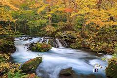 Oirase ~  (JB ) Tags: road japan forest canon river aomori    tohoku redleaf ef2470mmf28lusm silky   towadako oirase   2015      ef1635mmf28liiusm   5dmki 5dmkiii    ef70200mmf28lisiiusm   jb