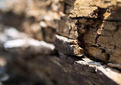 21 May 16 Fallen Tree, Detail (ethanbeute) Tags: forest colorado hiking hike coloradosprings hikingtrail pikenationalforest greenmountainfalls forested foresttrail catamounttrail catamountreservoir catamountcreek