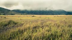 100 days of summer (chocoorange) Tags: grass fog indonesia dry bromo semeru tengger batok